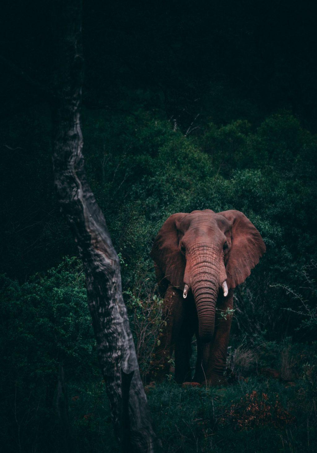 Mozambican Safari Camp - Milibangalala, Maputo Elephant Reserve